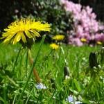 Co nesmí chybět na každé zahradě?